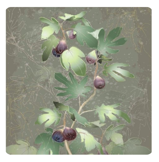 u1408-fig-tree-drawing-stock-illustrations-royalty-free-fig-tree-vectors-download-on-depositphotosu00ae-2020-08-18-14-48-51-1